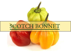 Fave Scotch Bonnet